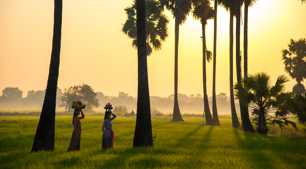 Indonesian women walk in rice field in the morning, Ubud, Indonesia