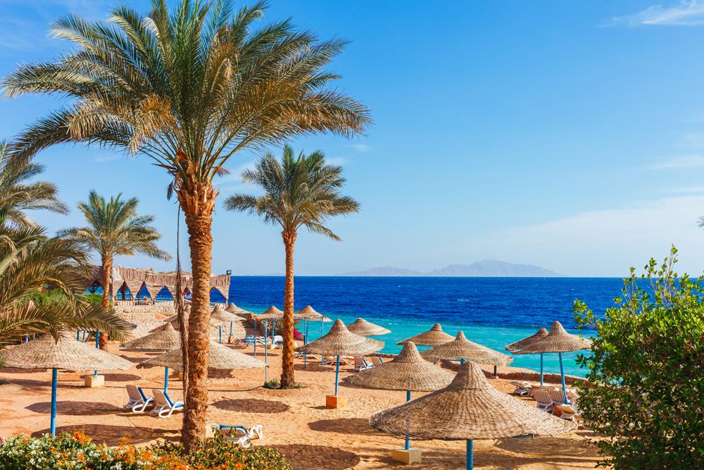 Sunny resort beach with palm tree at the coast shore of Red Sea in Sharm el Sheikh, Egypt