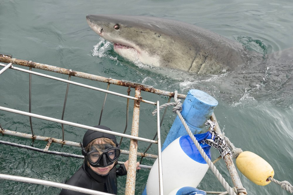 Woman in a shark cage with white shark in South Africa