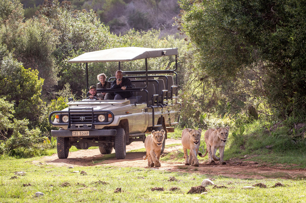 Botlierskop Private Game Reserve, South Africa | Photo Credit: Thompsons Holidays