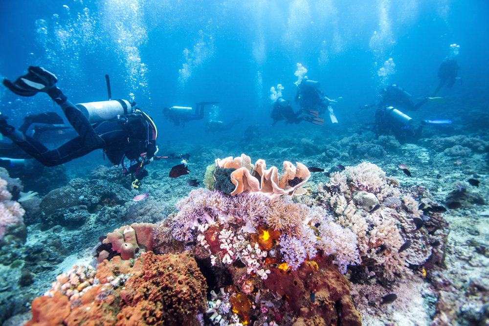 Scuba divers passing through colourful tropical coral reef with fishes, Great Barrier Reef, Queensland, Australia