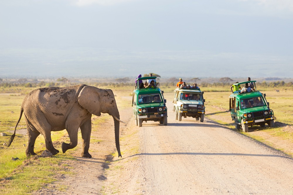 Tourists in safari jeeps with big wild elephant crossing dirt road in Amboseli National Park, Kenya