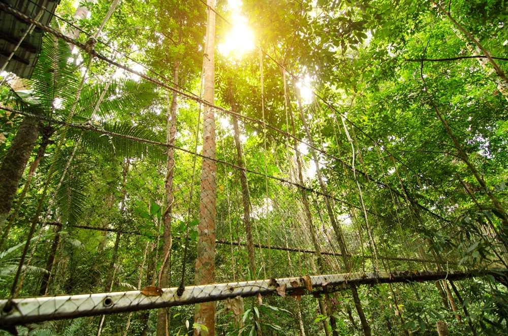 Canopy walkway in Taman Negara, Malaysia