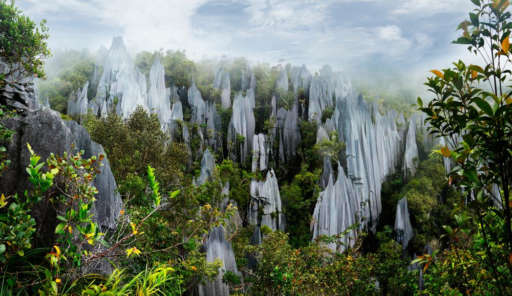 Pinnacles in Mulu National Park, Malaysia