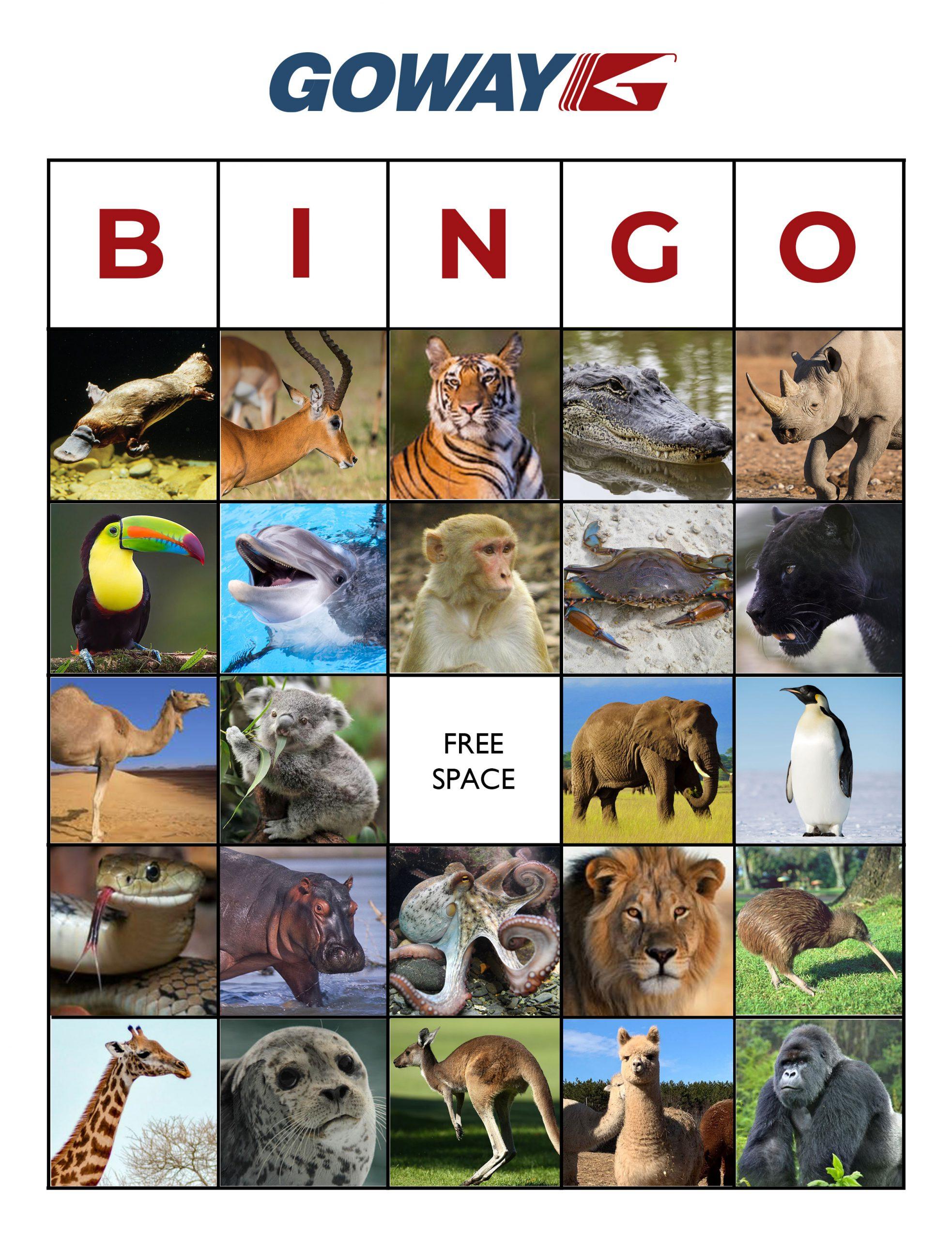 Goway Animal Bingo