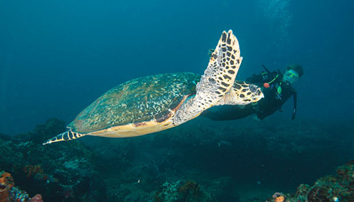 Diving with a turtle at Rocktail Beach Camp
