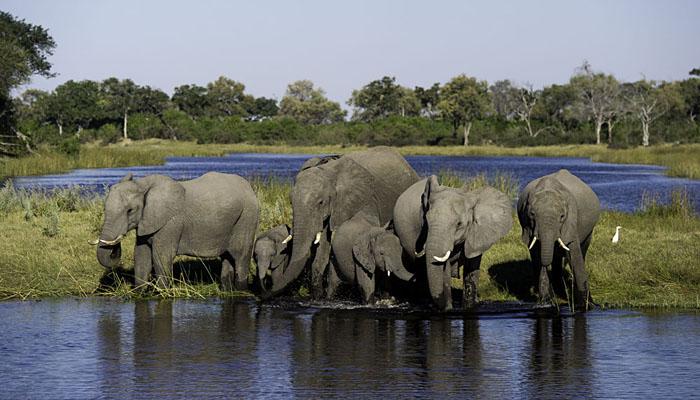 Elephants at Duma Tau Camp Linyanti Botswana