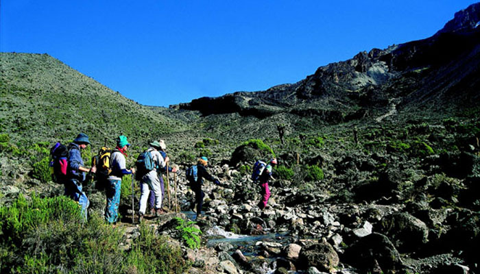 Mount Kilimanjaro climbers in row with great greenery Tanzania