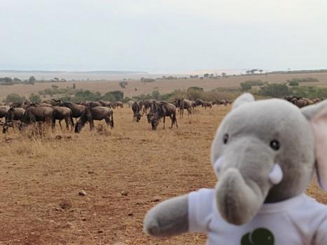 Thandi-and-Wildebeest