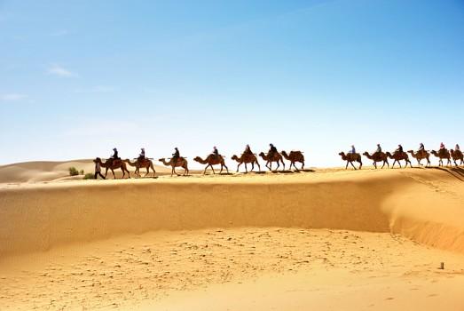 Desert Camels Caravan Morocco