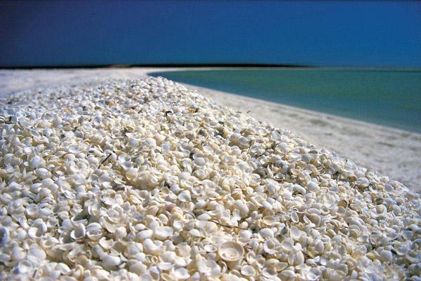 Shark Bay World Heritage ARea, Western Australia