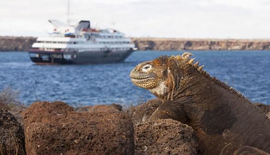 Silversea Galapagos Vessel with Iguana in Forefront, Galapagos Islands, Ecuador