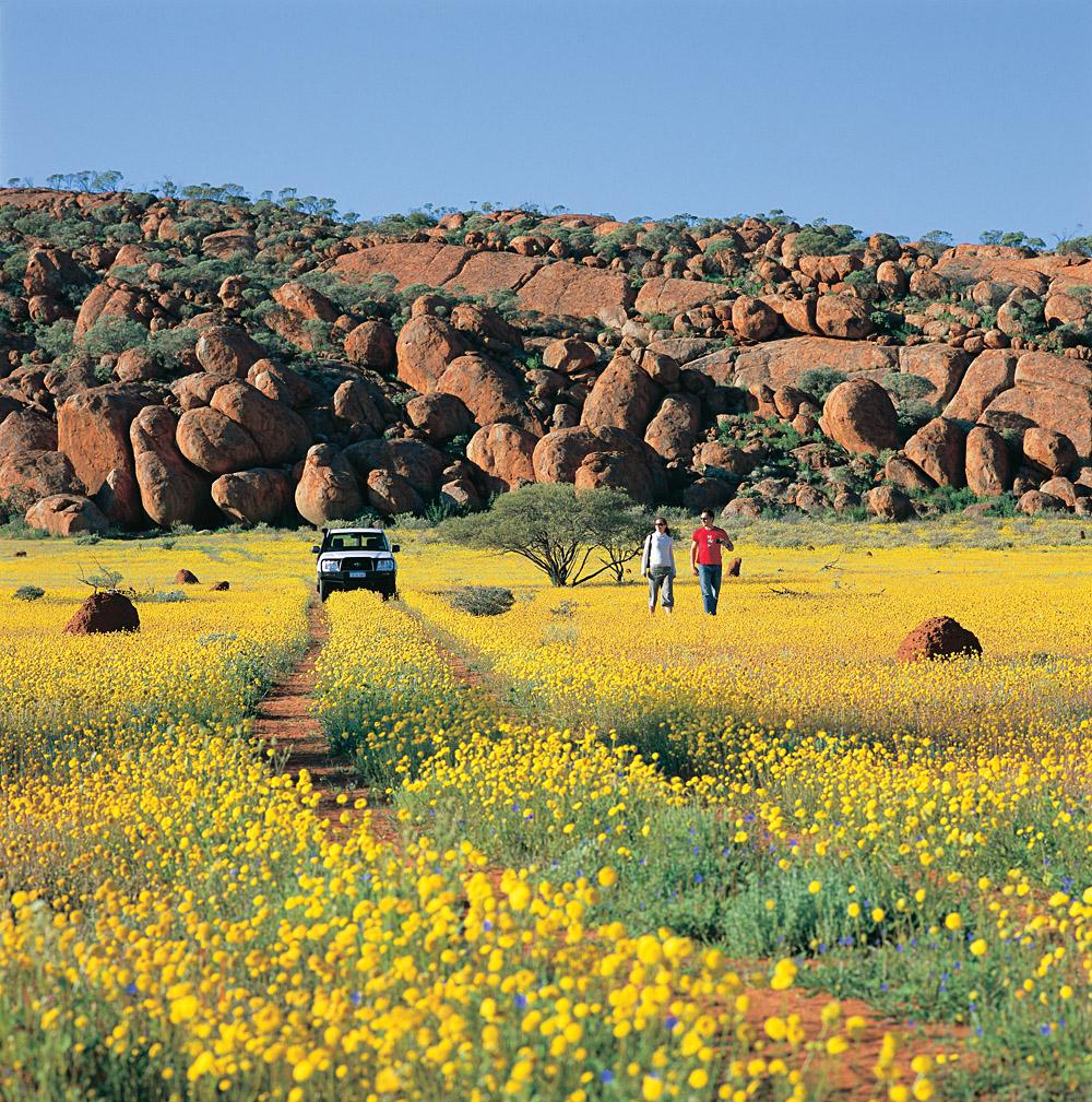 Western Australian Wildflowers