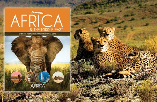 Cheetahs in Sabona Game Reserve, South Africa and Africa Brochure Cover