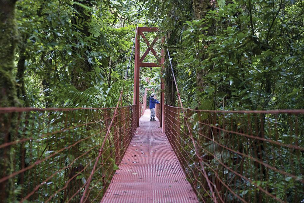 Monteverde Cloud Forest canopy walk, Costa Rica