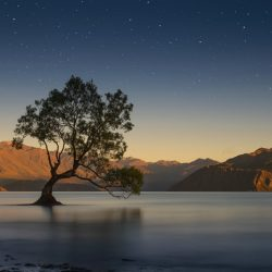 newzealand-tree