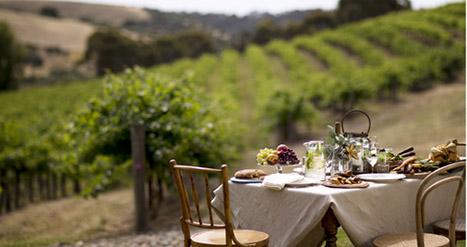Explore the Claire Valley wine region