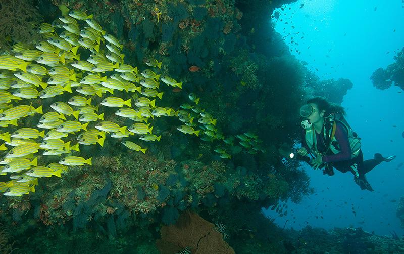Diving at Centara Grand Maldives